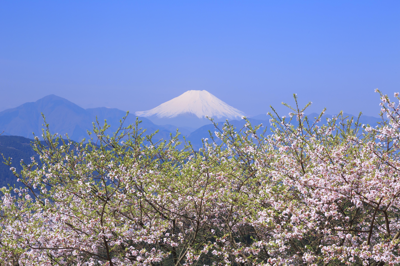 <PR>ふたつの絶景と美食を求めて、春の高尾山へ