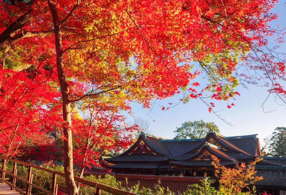 Discover Japan10月号「京都の誘惑」発売中です!