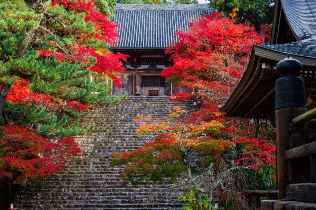 京都で一番早く紅葉が見られる<br>絶景の地「神護寺」へ