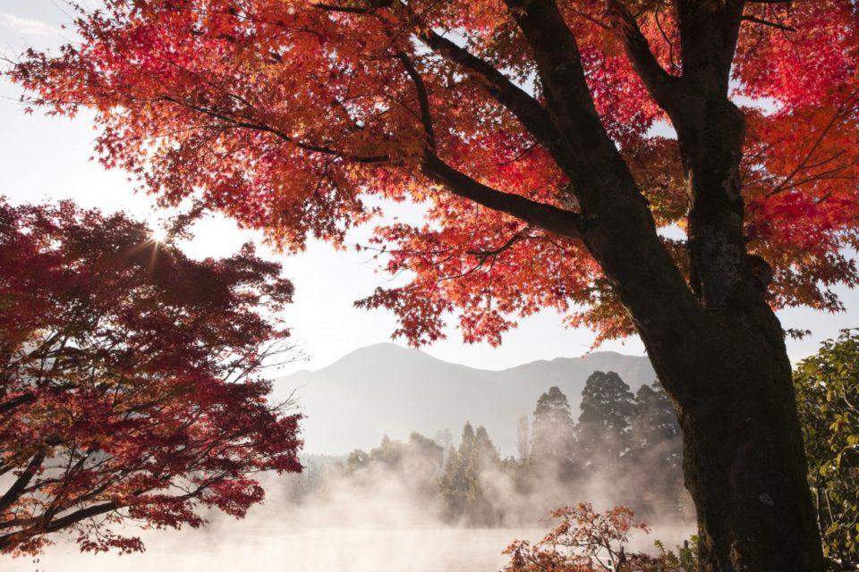 風景写真家 山梨勝弘が撮影する絶景<br><small>今年こそ見たい日本の紅葉ベスト5 西日本編</small>