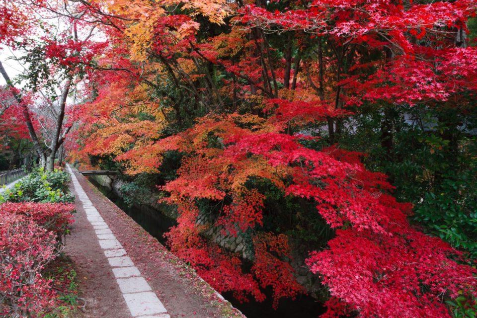 京都写真家 水野克比古が撮影する京都の絶景<br><small>今年こそ見たい日本の紅葉ベスト5|京都編</small>