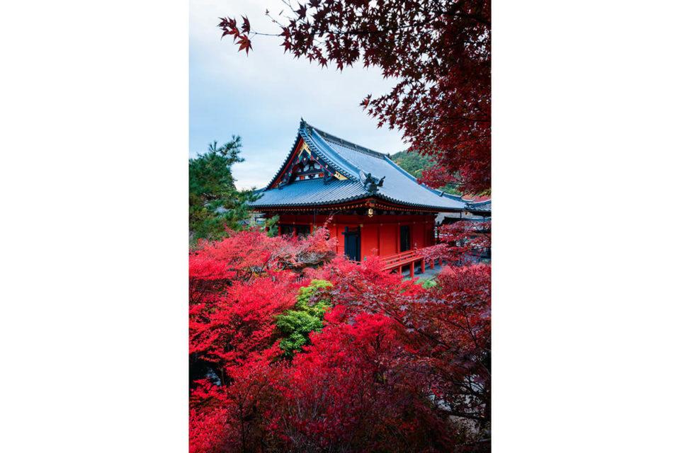 京都の紅葉、見るなら穴場の洛外の門跡寺院へ!