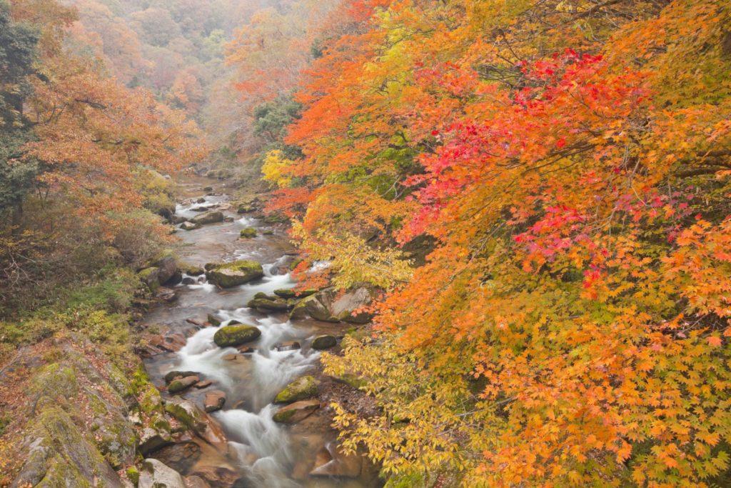 <strong>写真家が切り取る、</br>一度は訪れたい紅葉スポット</strong>
