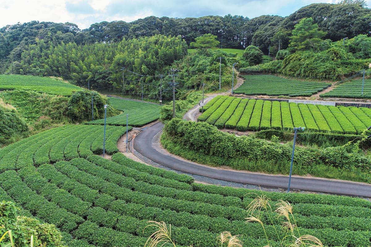 アートで日本茶の魅力を再発信。<br>