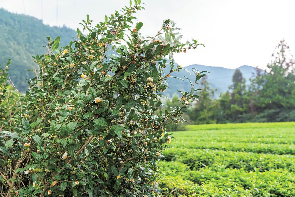アートで日本茶の魅力を再発信。 | Discover Japan|ディスカバー ...