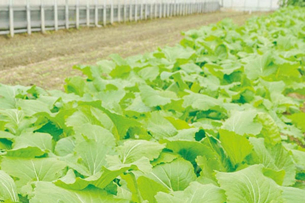 植物の謎を解く研究が農業の未来をひらく<br>はじまりの奈良