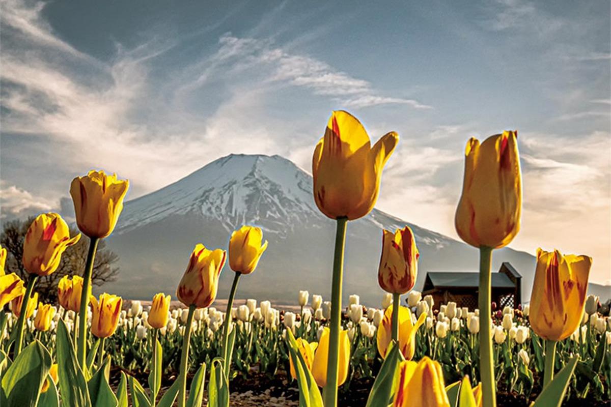 Discover Japan絶景プロジェクト<br>4月テーマ:草花