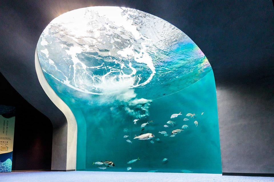 「四国水族館」激しい潮流を真下から観る新体験
