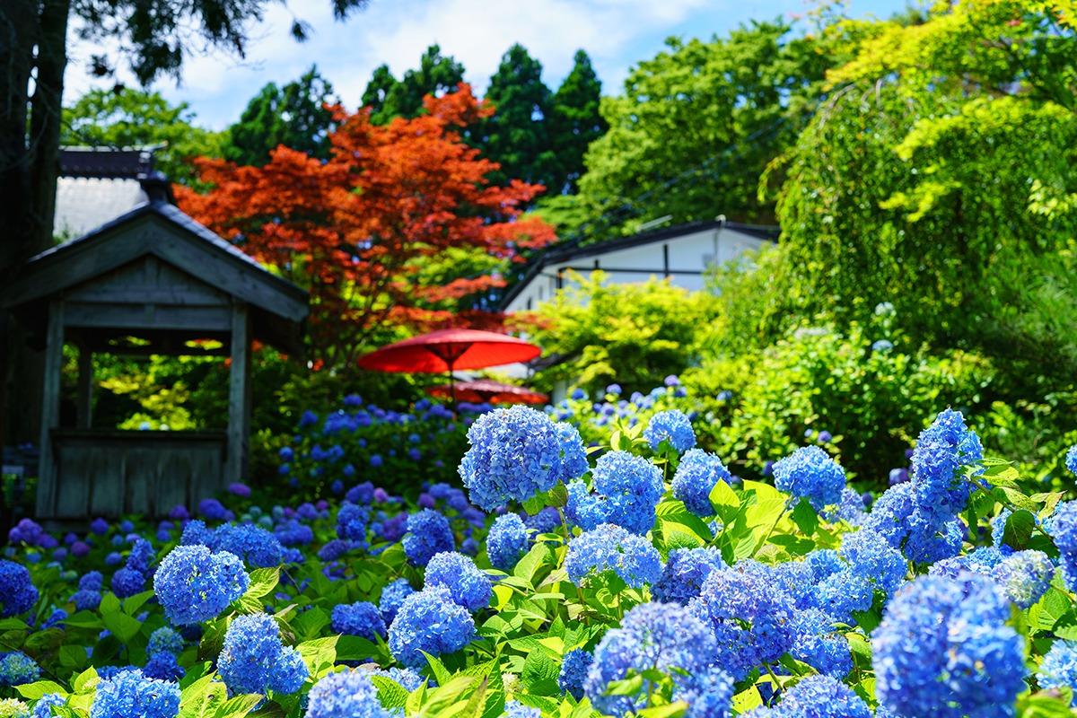 全国有数の米どころで、<br>日本酒づくりも盛んな「秋田県」