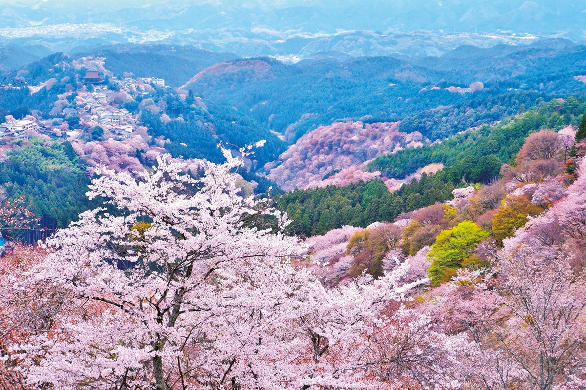 日本建国の地ともされる<br>いにしえの都が置かれた「奈良県」