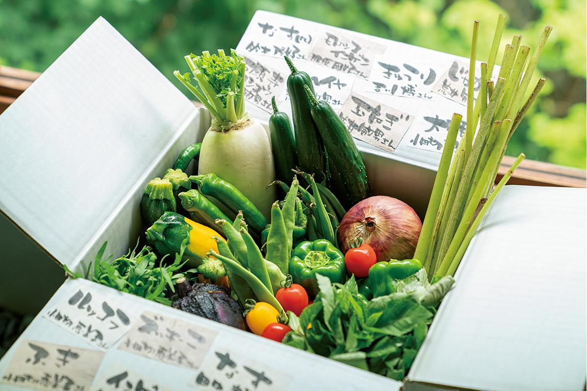 野菜詰め合わせやご当地の人気フルーツなど<br>「青果系お取り寄せグルメ」