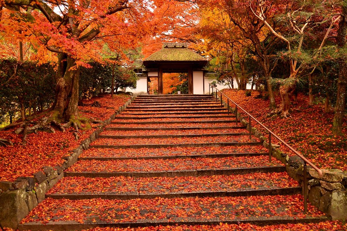 秋の極上 京都旅を堪能。<br>京都ブライトンホテルの『貸切紅葉プラン』