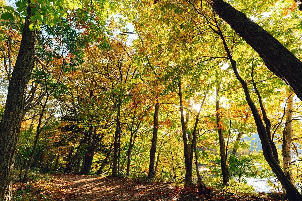アイヌの聖地・阿寒湖で、秋の大自然を満喫する。