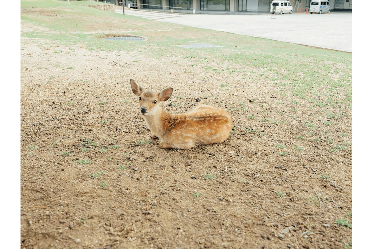 奈良二度目の修学旅行。<br>くるみの木・石村由起子さんとめぐる。【後編】