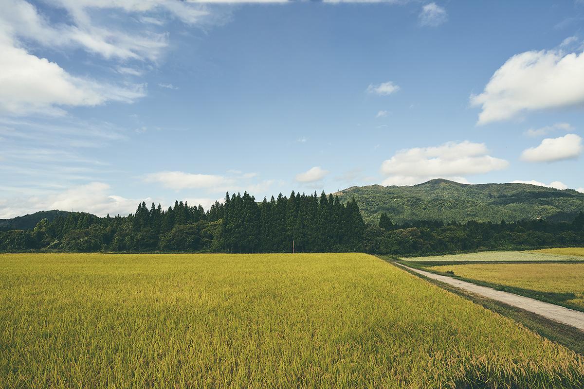 今秋デビュー!豊かさを届ける福島の米<br>「福、笑い」できました。【後編】