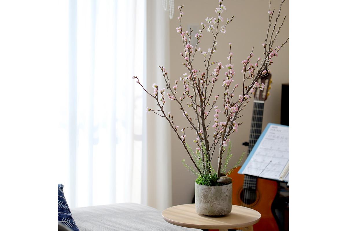 おうちでお花見を楽しめる、花工房あげたけの「自宅で!桜のお花見キット」