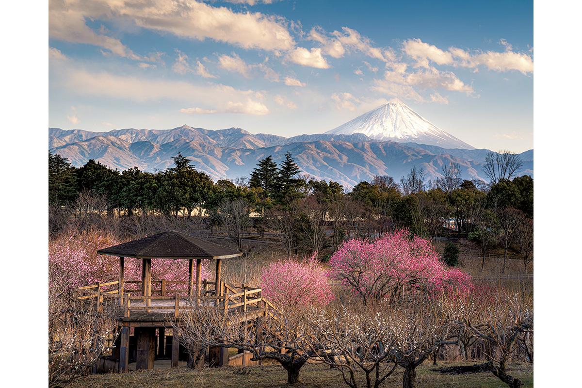 Discover Japan絶景プロジェクト<br>3月テーマ:春の気配