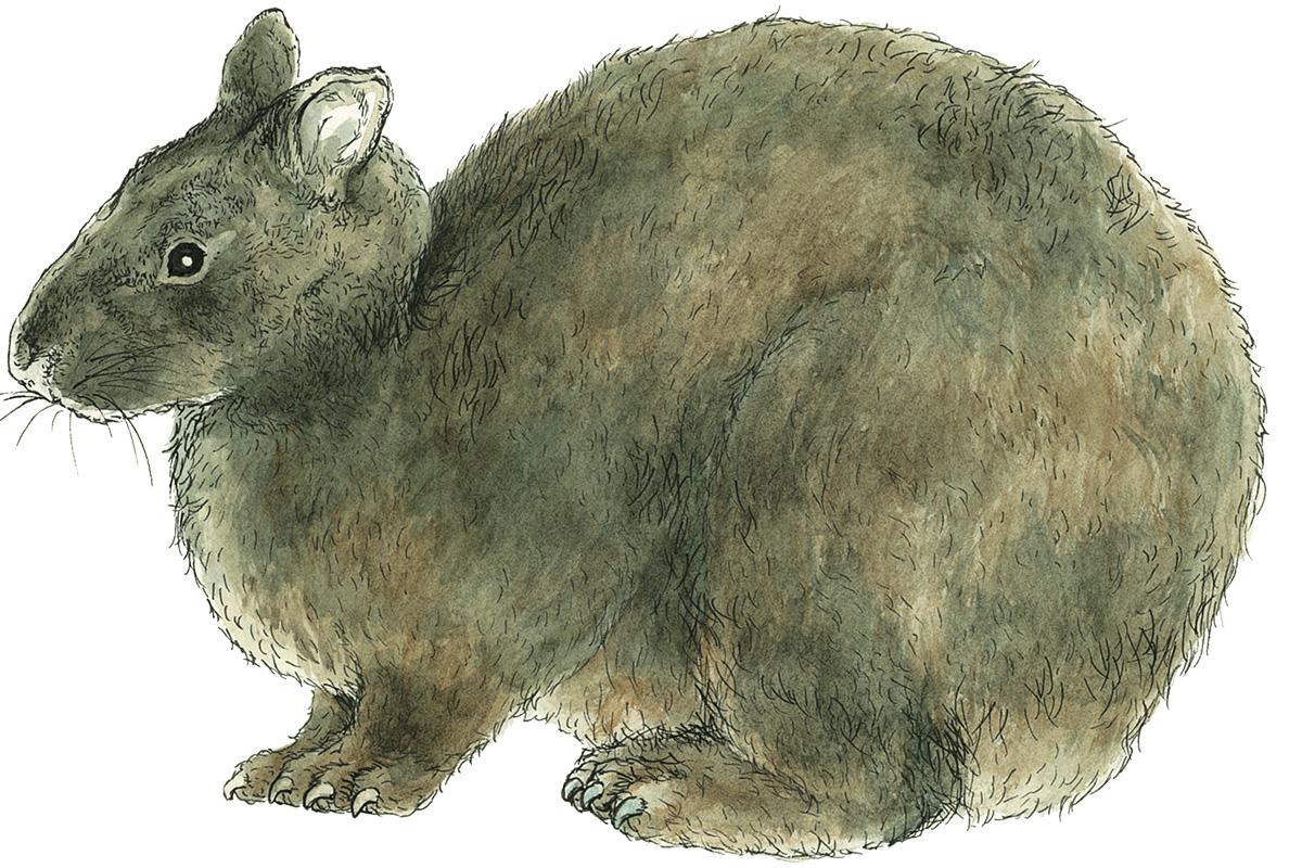 世界で奄美大島と徳之島にしかいない<br>「アマミノクロウサギ」<br><small>《生物多様性を代表する三大スター》</small>