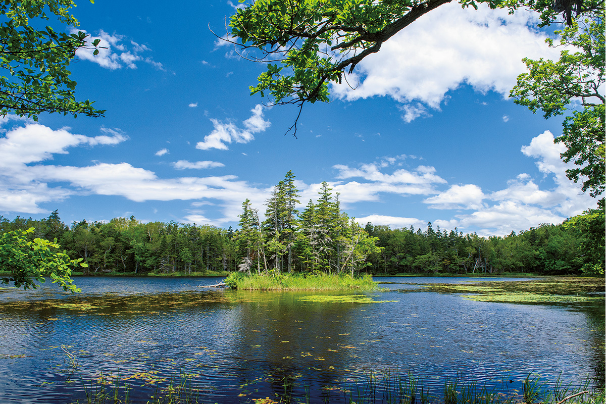 <small>日本最北の世界自然遺産!</small><br>北海道・知床で知るエコツーリズム<br><small> 中編「陸」から知る知床