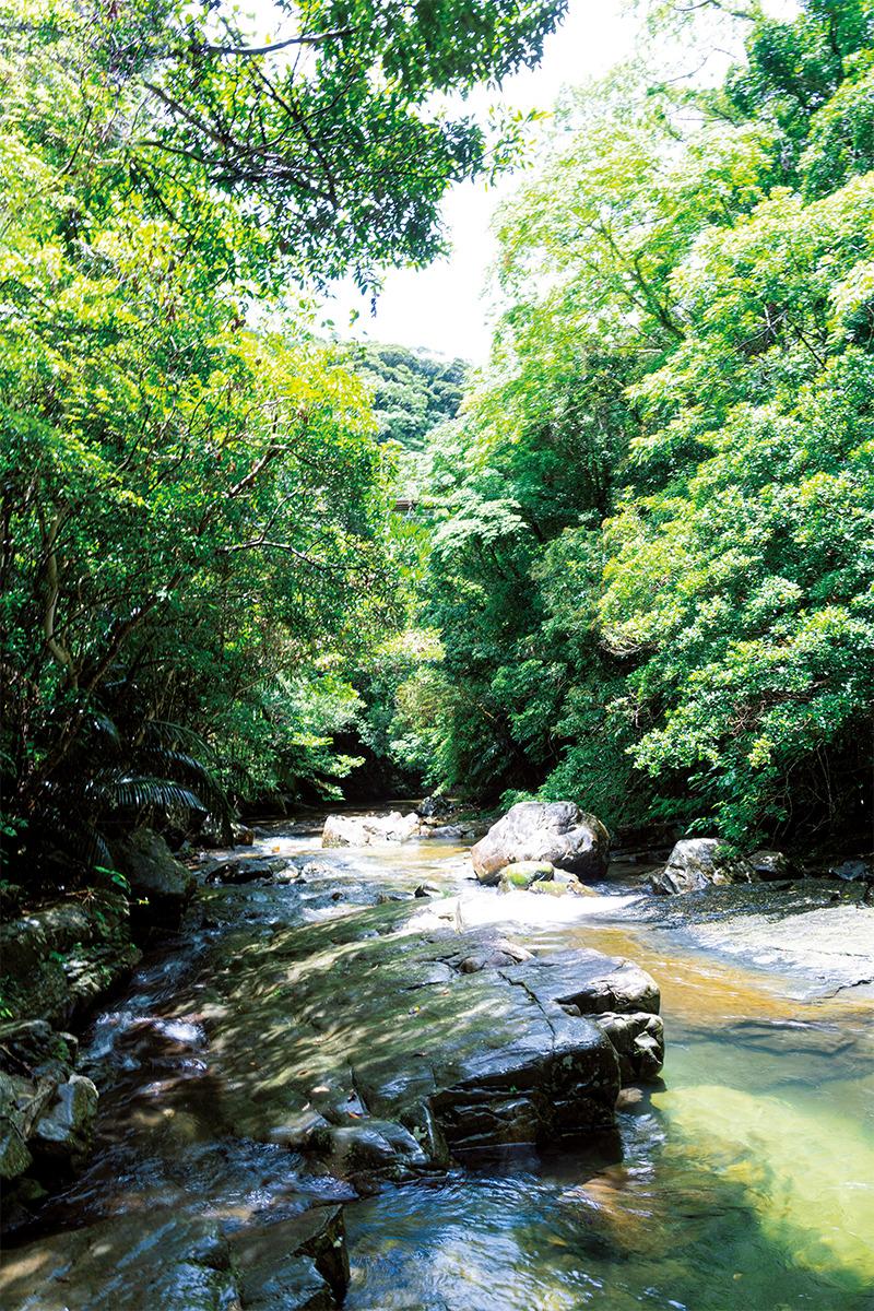長い年月を経て育まれた自然の恵み<br>「奇跡の森」沖縄島北部【前編】<br><small>《世界自然遺産をめぐる旅》</small>