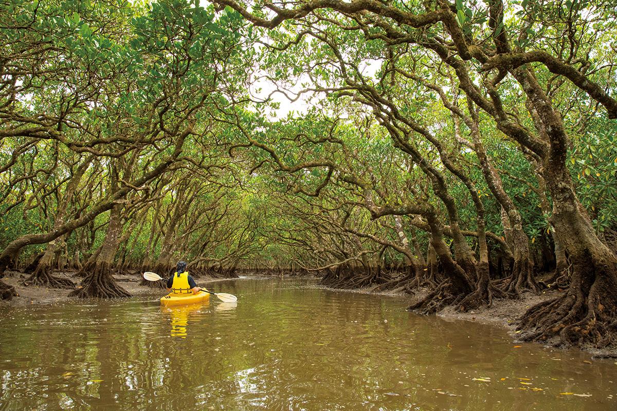 古くから自然とともに暮らしてきた奄美大島の人々【前編】<br><small>エコツアーに参加!奄美大島の稀少ないきものに会いに行く!</small>