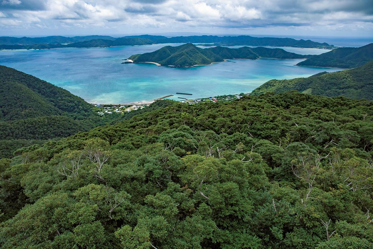 大自然と歴史・文化が残る奄美大島【前編】<br><small>《世界自然遺産をめぐる旅》</small>